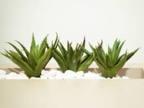 is aloe vera good for your skin